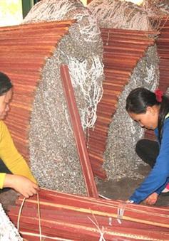 Vài triệu đồng mang lại sinh kế mới cho phụ nữ đảo Vũng Ngán, TP Nha Trang
