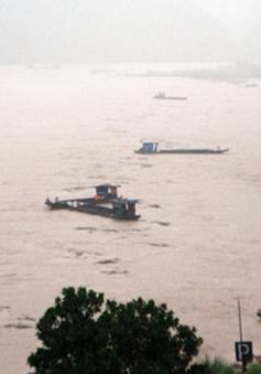 Mưa to, lũ lớn bất ngờ gây thiệt hại tại Lào Cai