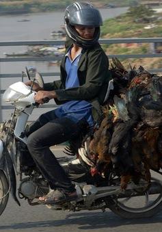 Campuchia phát hiện thêm hai ca nhiễm cúm gia cầm H5N1