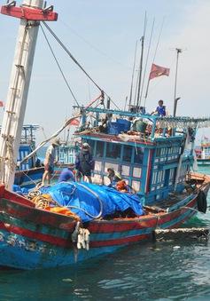 Ngư dân tỉnh Quảng Trị, Quảng Ngãi quyết tâm bám biển