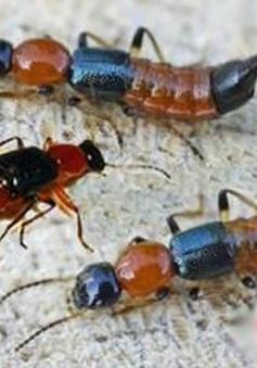 Phòng và điều trị bệnh viêm da do côn trùng