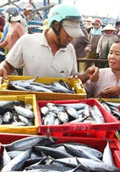 """Ngư dân Quảng Trị """"trúng đậm"""" vựa cá thu lớn nhất trong năm"""