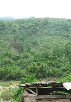 Quảng Trị tăng cường phòng chống cháy rừng phòng hộ