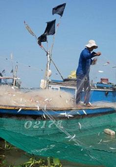Phát triển các nghiệp đoàn nghề cá - Điểm tựa cho ngư dân bám biển