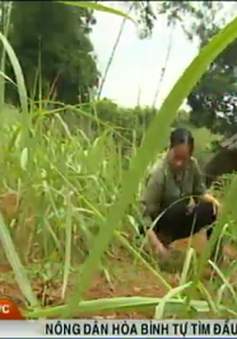 Nông dân Hòa Bình tự tìm đầu ra cho nông sản
