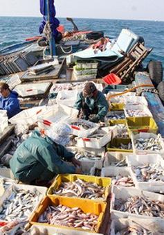 Hỗ trợ ngư dân bám biển - Tiếp cận từ thị trường