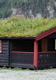 Lạ mắt những ngôi nhà mái cỏ ở Na Uy