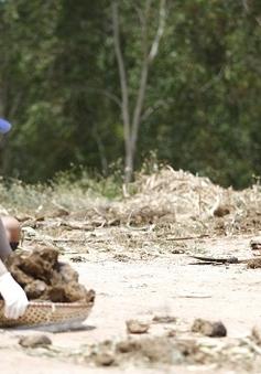 Cuộc đua kỳ thú 2014 - Tập 7: Các tay đua thử tài bắt vịt, dọn phân voi