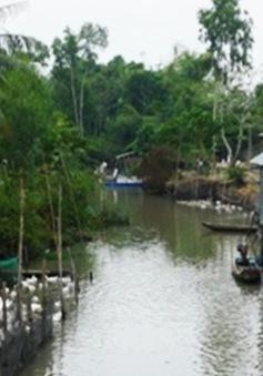Kiên Giang: Tiêu hủy 1.600 con gia cầm nhiễm cúm A/H5N1