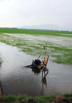 Hỗ trợ 2.000 tấn lúa giống cho người dân sau lũ
