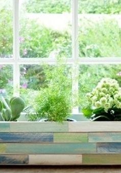 Decor sinh động cho ô cửa sổ