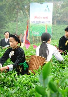 Di sản văn hóa trà Việt
