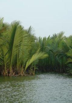 Khám phá xứ dừa ở Hội An