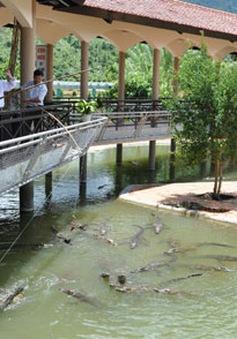 Câu cá sấu ở khu du lịch Yang Bay, Khánh Hòa