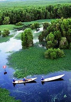 Khám phá rừng U Minh Hạ