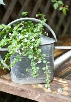 10 kiểu chậu hoa sáng tạo cho sân vườn