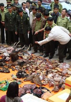 Hiểm họa từ việc sử dụng sản phẩm động vật hoang dã