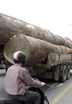 Đà Nẵng: Xử lý xe quá tải vẫn nửa vời