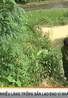 Người trồng sắn lao đao vì nhà máy ethannol