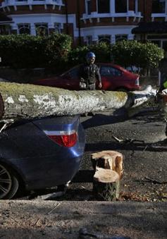 Châu Âu: Bão lớn đổ bộ, ít nhất 13 người thiệt mạng