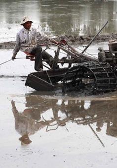 Quảng Trị: Thiếu trầm trọng đất canh tác vụ Đông Xuân sau lũ