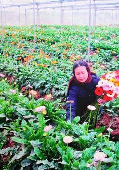 Thiếu giống hoa quý, mất hàng triệu USD mỗi năm để nhập khẩu