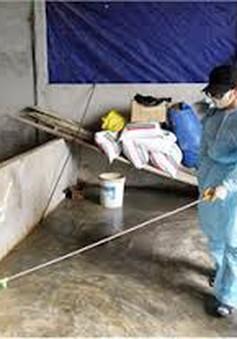 Thanh Hóa đã khống chế dịch lở mồm long móng gia súc