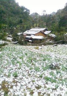 Băng tuyết gây thiệt hại lớn tại Lào Cai, Hà Giang