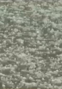 VIDEO: Mưa đá ở huyện Tủa Chùa, Điện Biên