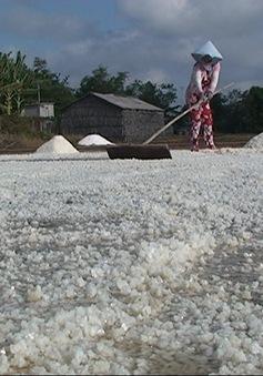 Bến Tre: Mưa trái mùa gây thiệt hại cho diêm dân