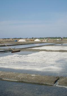 Diêm dân Quảng Ngãi cần vốn cho mô hình muối phủ bạt