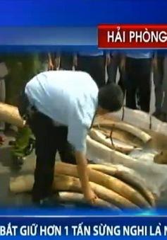 Bắt giữ hơn 1 tấn sừng bị nghi là ngà voi nhập trái phép