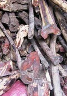 Tịch thu hàng chục tấn gỗ trắc vận chuyển trái phép