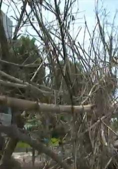Hà Nam: Hàng trăm hộ dân dựng hàng rào, lều bạt ngăn cản nhà máy hoạt động