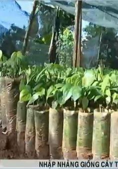 Nhập nhằng giống cây trồng Eakmat