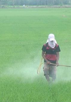 ĐBSCL: Hàng chục nghìn ha lúa Hè Thu chết do dịch hại tấn công