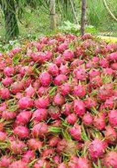 ĐBSCL: Nhiều mặt hàng trái cây giảm giá mạnh