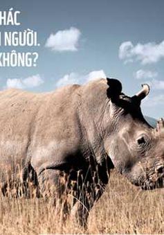 """Khởi động chiến dịch """"Nói không với sừng tê giác"""""""