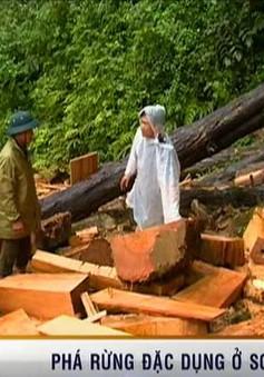Vụ phá rừng Sơn La: Có sự tiếp tay của chủ rừng?