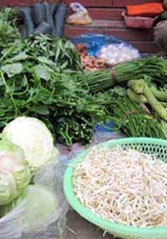 """Đà Nẵng: Giá thị trường không """"nóng"""" sau bão"""