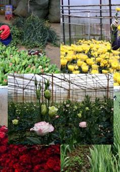 5 loài hoa Đà Lạt được cấp chứng nhận độc quyền