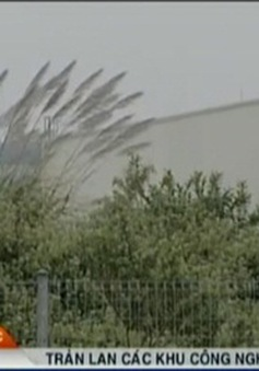 Tràn lan các khu công nghiệp bỏ hoang