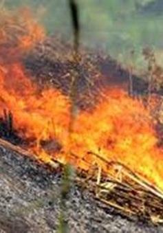 6 tỉnh có nguy cơ cháy rừng ở cấp nguy hiểm