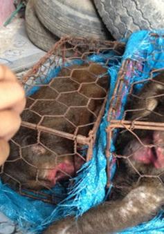 Bàn giao hai cá thể khỉ mắt đỏ cho VGQ Phong Nha - Kẻ Bàng