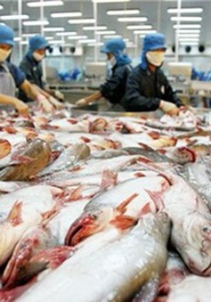 Thêm 3 trang trại cá tra đạt tiêu chuẩn quốc tế