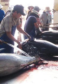 Sản xuất cá ngừ theo định hướng thị trường