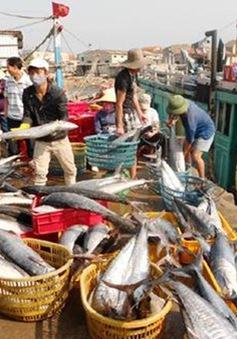 Chính phủ họp bàn về khuyến khích phát triển thủy sản