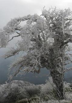 Quá đẹp rừng cây phủ trắng băng tuyết tại Cao Bằng