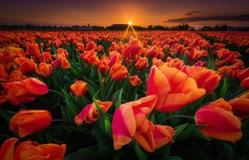 Những bức ảnh đẹp mê hồn ở vùng đất thần tiên Hà Lan