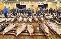 Chợ cá Tsukiji - Chợ hải sản lớn nhất thế giới chuẩn bị di dời